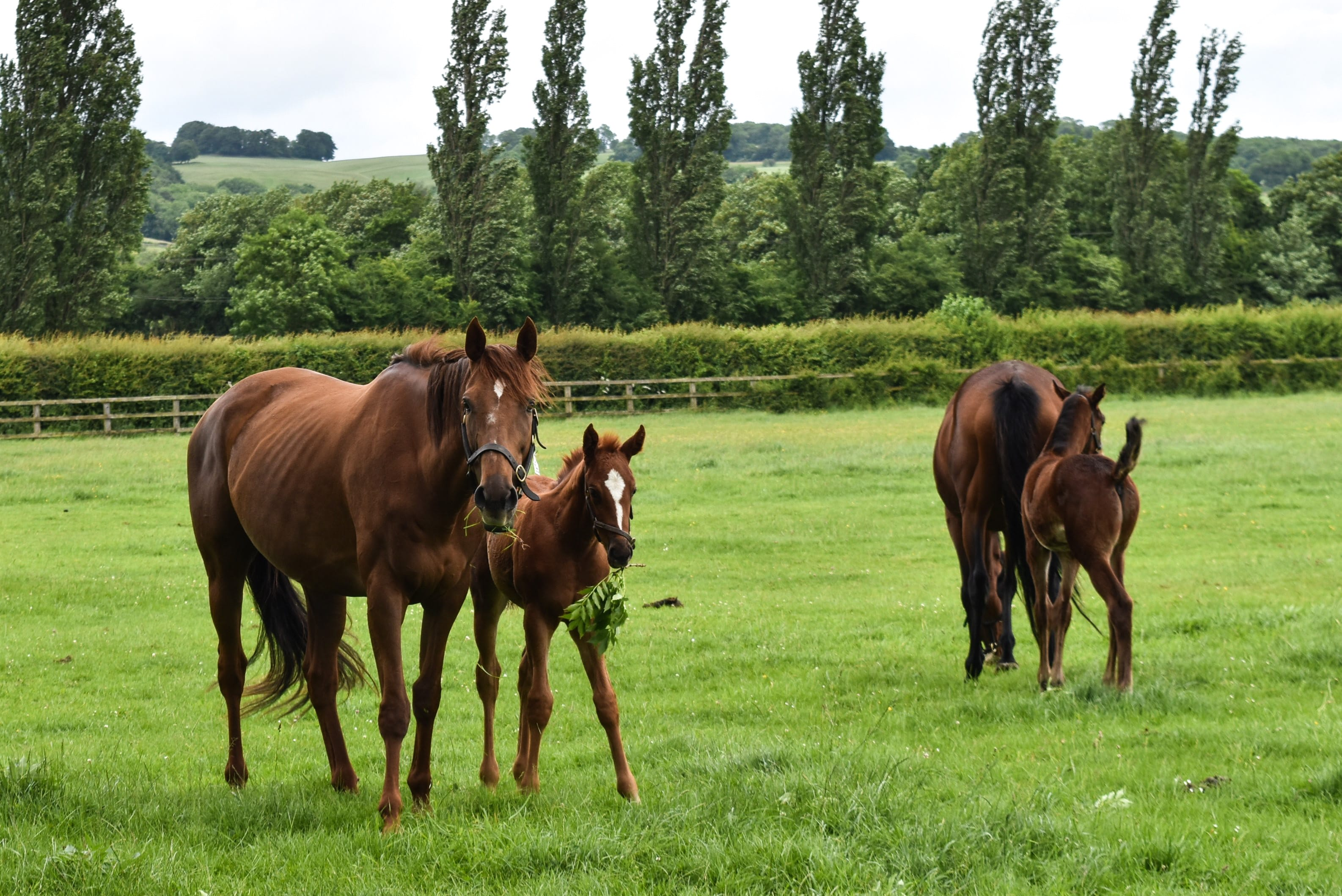 Mares and foals at Overbury Stud